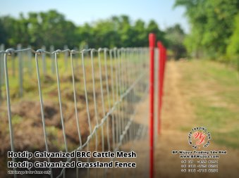 BP Wijaya Security Fence Manufacturer Malaysia Hotdip Galvanized BRC Cattle Mesh Hotdip Galvanized Grassland Fence Iron Field Fence Horse Cow Animals Farm Fence with Mesh Hinge Joint Knot Field Fence Mesh A13